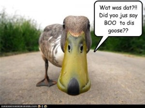 Boo to goose