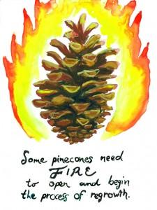 serotinous-pine-72