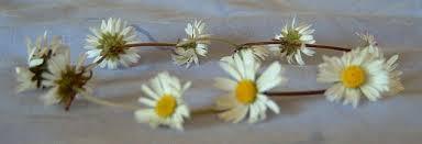 daisy chain