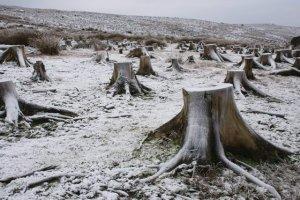 Tree_Stumps_