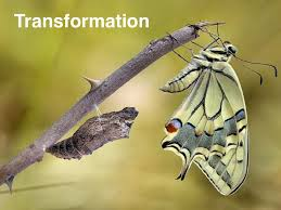 transformation (1)